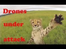 Drones animal attack!